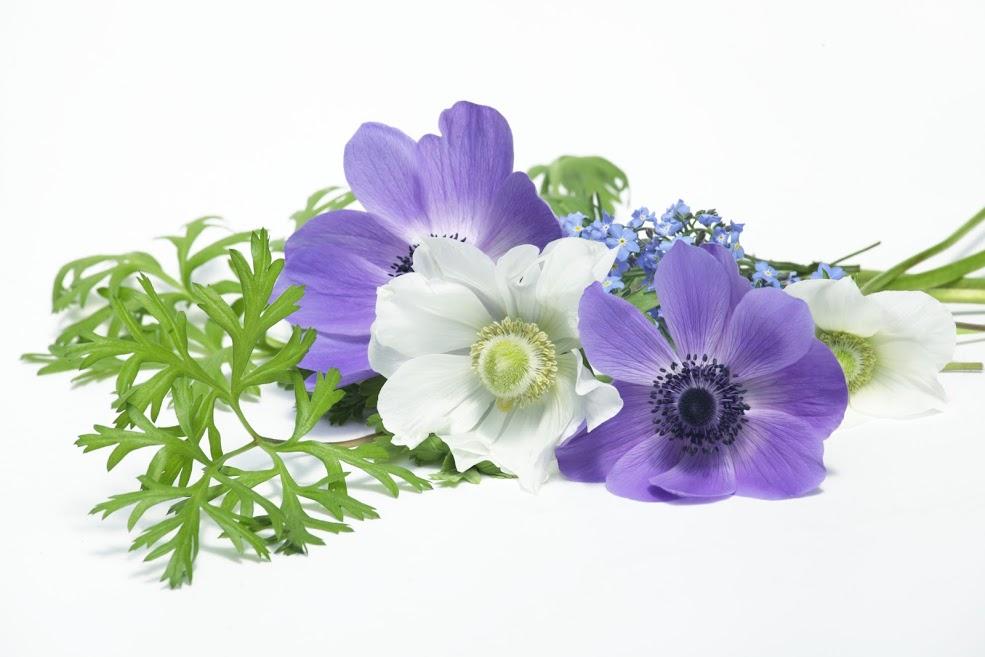香川県の葬儀社ランキング10選