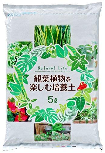観葉植物用の土人気おすすめランキング15選【虫がわかない土は?室内向きのものも紹介】のサムネイル画像