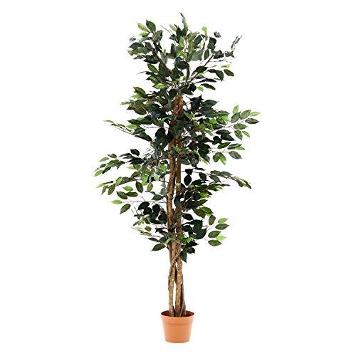 棚に置ける観葉植物の人気おすすめランキング15選【おしゃれなインテリア】