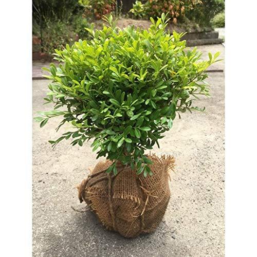 低木シンボルツリーの人気おすすめランキング15選【洋風・和風】