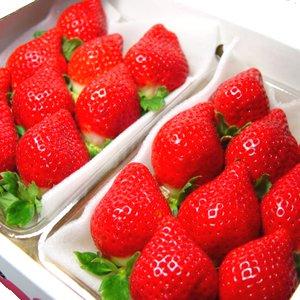 通販で買えるいちごの人気おすすめランキング10選【とちおとめなどの人気の品種も】