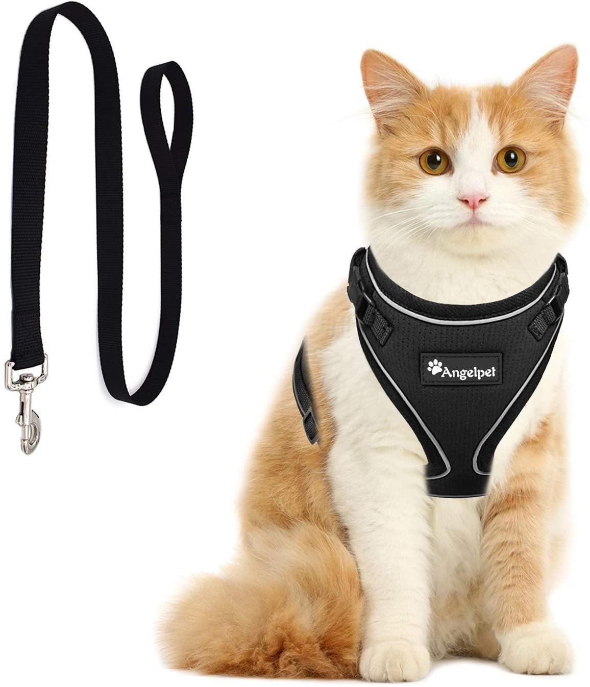 猫用ハーネスの人気おすすめランキング10選【手作り方法も】のサムネイル画像