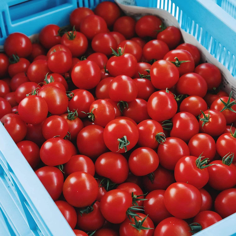 通販で買えるトマトの人気おすすめランキング10選【美味しい】