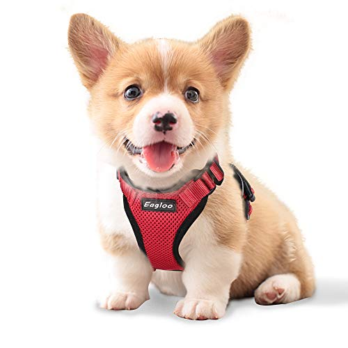犬用ハーネスの人気おすすめランキング15選【おしゃれでかわいいものも!】