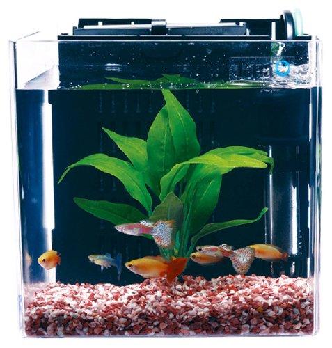 熱帯魚の人気おすすめランキング15選【家庭でも飼える時代に】のサムネイル画像