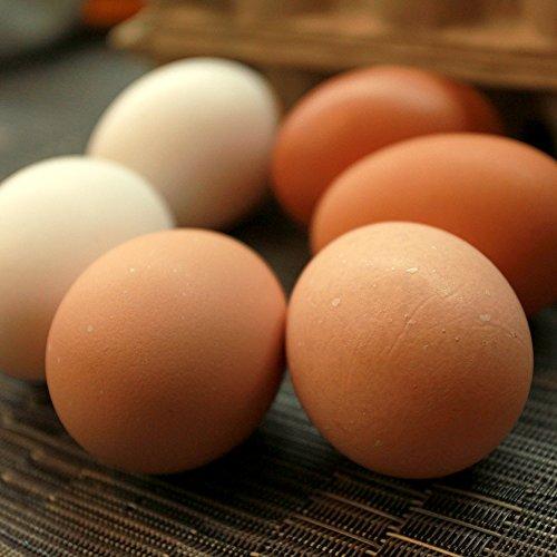 【2021年最新版】 卵の人気おすすめランキング21選【美味しい高級卵も!】のサムネイル画像