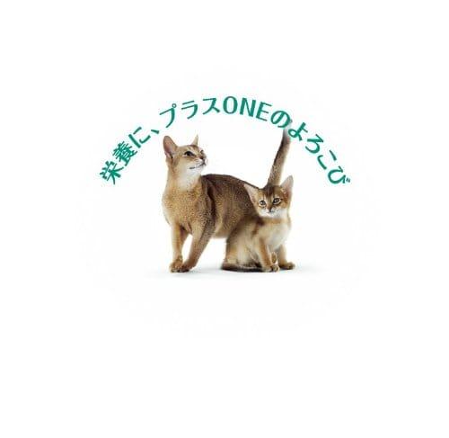 https://images-fe.ssl-images-amazon.com/images/I/31EAtzQbTUL.jpg