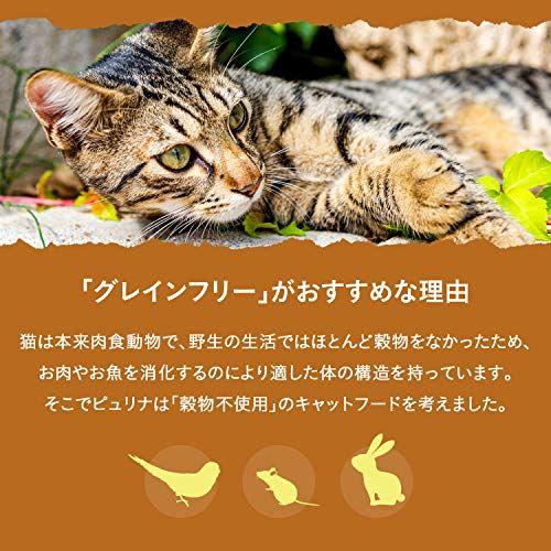 https://m.media-amazon.com/images/I/51PDdysHtyL.jpg