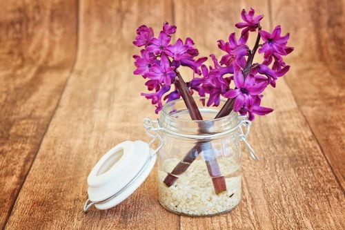 https://cdn.pixabay.com/photo/2015/04/30/16/47/hyacinth-747131_960_720.jpg