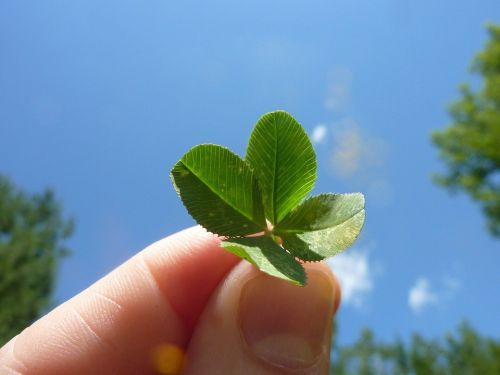 https://cdn.pixabay.com/photo/2012/03/01/00/39/four-leaf-clover-19776_960_720.jpg