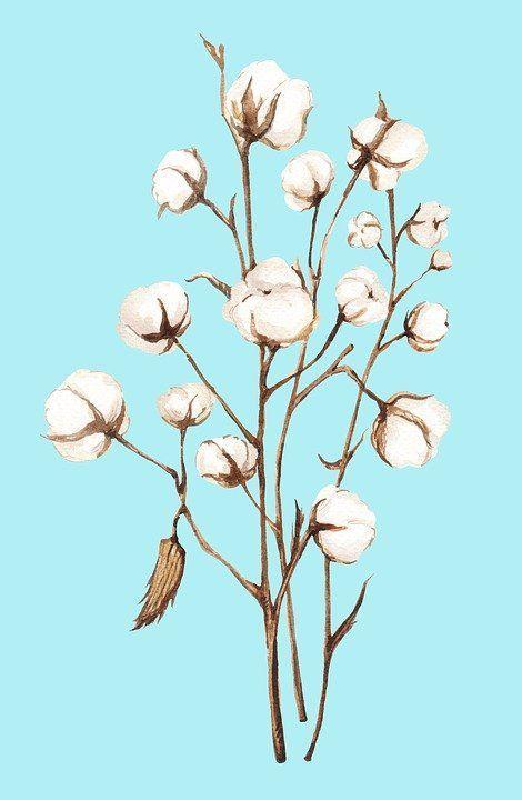 https://cdn.pixabay.com/photo/2018/07/26/23/00/cotton-3564829_960_720.jpg